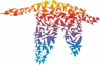 Birds Formation