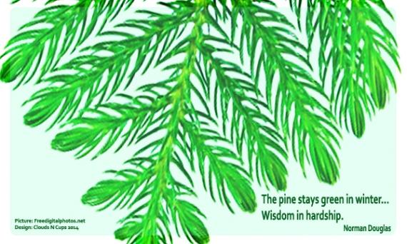 18JAN2014 - Pine Stays Green